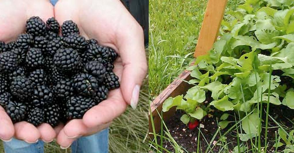 05-08-14-veggie-garden