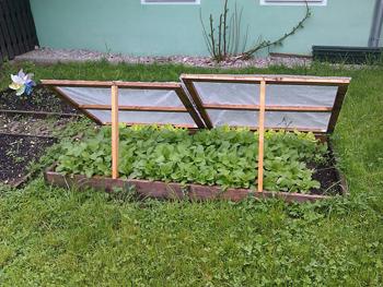 gardening tips tulsa