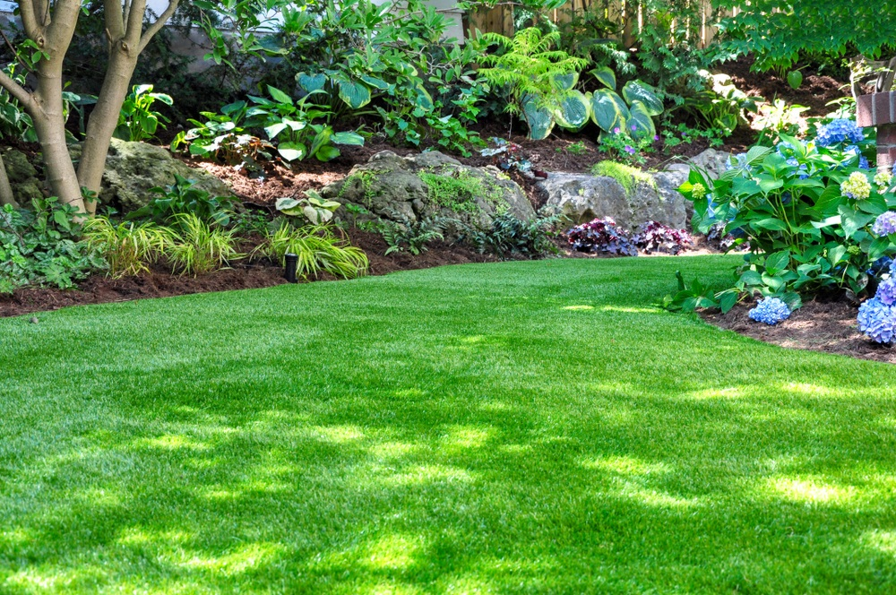 reseed your fescue in the fall to keep it coming back lush and green